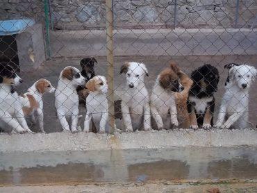 Corso di preparazione per il possesso responsabile del cane