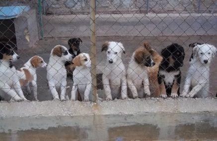 Affidati a due associazioni e ad un canile rifugio dei cani destinati all'adozione
