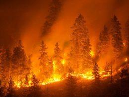 Siamo messi bene, i grillini, per gli incendi, sperano in un intervento della Regione