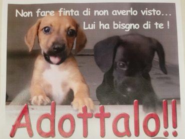 Campagna di sensibilizzazione per l'adozione dei cuccioli ricoverati nel rifugio sanitario