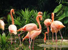 L'idea vincente, trasformare il Giardino zoologico di Villa d'Orléans nel primo smart zoo d'Italia