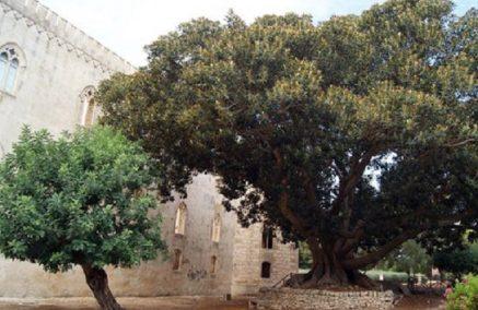 Protocollo d'intesa fra Comune di Ragusa e Ordine degli Agronomi