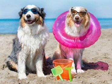 Una spiaggia per gli amici a quattro zampe