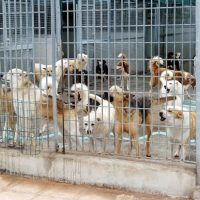 Indicazioni per gli utenti del dipartimento di prevenzione veterinario