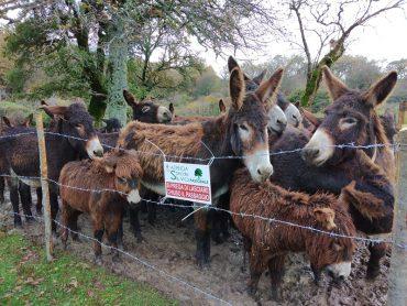 Un progetto per la legalità da Chiaramonte a Troina: cento asini ragusani ripopoleranno i boschi sottratti alla mafia
