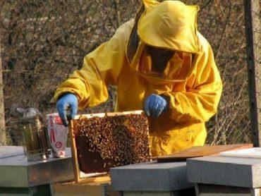 Corso di apicoltura urbana