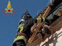 I Vigili del Fuoco liberano un rapace impigliato tra le tegole di un tetto a Ragusa Ibla