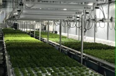 """Progetto """"INTESA"""", rafforzare la filiera produttiva serricola per un'agricoltura sostenibile"""